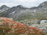 Fine haustfarger i fjellet